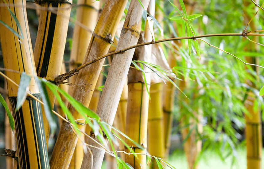 竹の銀行印