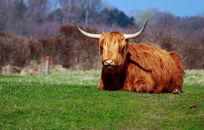 オランダ水牛(牛角)で作成する銀行印!美しい見た目で女性に大人気